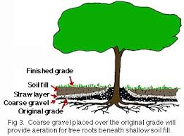 protecting existing landscape trees from construction damage due
