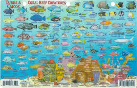 Map Of Turks And Caicos Turks U0026 Caicos Dive Map U0026 Reef Creatures Guide Franko Maps