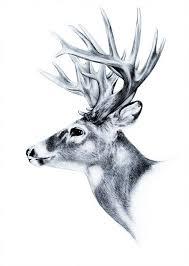 pin by b ukje on oh deer pinterest tattoo drawings and deer