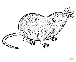 shrew for coloring page animal hand drawn shrew coloring pages