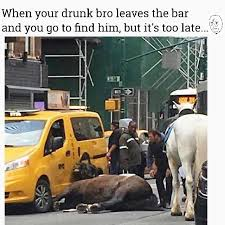 Meme Ny - a carriage horse in ny hit by a car rip meme by
