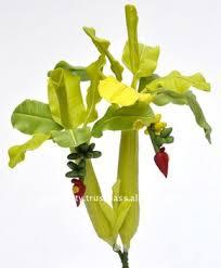 mini banana tree banana tree mini 6 artificial flowers thai clay handmade buy