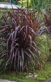 332 best dreamy plants to covet images on pinterest garden