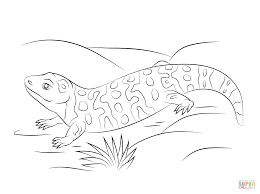 cute gila monster coloring page free printable coloring pages