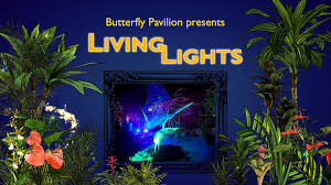 living lights colorado s only indoor and outdoor lighting