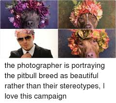 Pitbull Meme - 25 best memes about pitbull pitbull memes