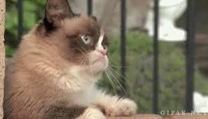Grumpy Cat Snow Meme - grumpy dwarf hashtag images on tumblr gramunion tumblr explorer