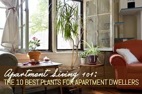 Plant For Bedroom Apartment Living 101 The 10 Best Plants For Apartment Dwellers