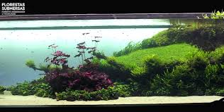 Amano Aquascaping Reefkeeping South Africa Reef Builders The Reef And Marine