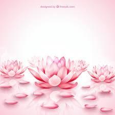 pink lotus flowers background vector free
