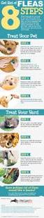 get rid of fleas in eight simple steps