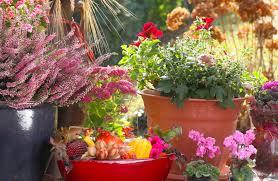 balkon grã npflanzen herbst so machen sie den balkon fit für den herbst