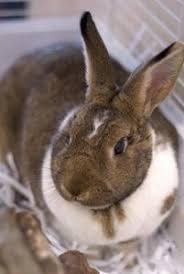 litterbox potty train bunny rabbit bunny