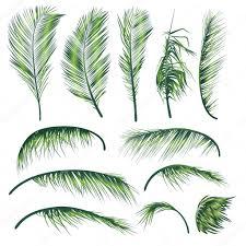 palm tree leaves u2014 stock vector dahabians 12404585