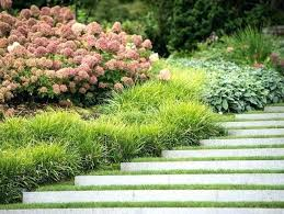 Bushes For Landscaping Landscaping Plants For Sun Small Landscape Plants That Take