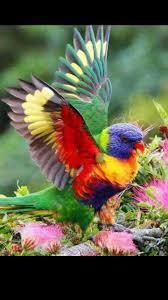 891 best beautiful birds images on pinterest beautiful birds