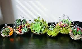cute plant succulent plants lucky bamboo the cute plants groupon