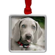 weimaraner ornaments keepsake ornaments zazzle