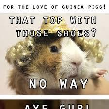 Shaved Guinea Pig Meme - for the love of guinea pigs by djenne meme center