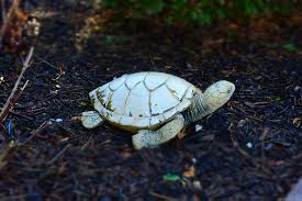 free photo turtle ornament front yard max pixel