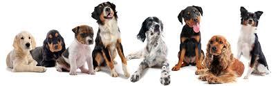 boxer dog rescue florida k9 korral sarasota sarasota rescue organizations