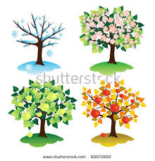 seasonal trees stock images royalty free images vectors