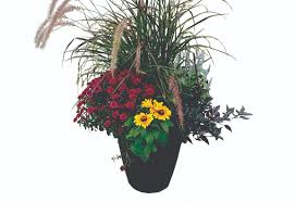think outside the planter box wedel u0027s nursery florist and