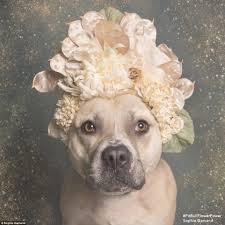 Dog Flower Arrangement Photographer Sophie Gamand Puts Orphaned Pit Bull Dogs In Flower
