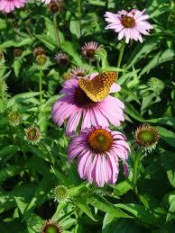 why plant native plants south central pennsylvania native plants garden housecalls