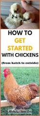 How To Keep Backyard Chickens by 192 Best Images About Backyard Chickens On Pinterest Chicken