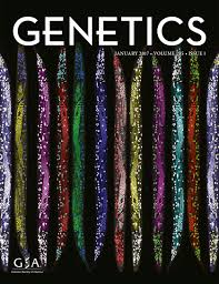 three dimensional genome organization and function in drosophila