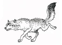 coloring wolves animal coloring pages 18