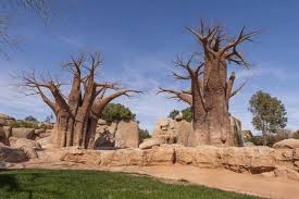 valencia nightlife guide bioparc in valencia what to do and see in valencia tripkay guide