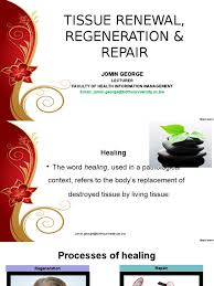 Tissue Renewal Regeneration And Repair Tissue Renewal Mitosis Cell Cycle