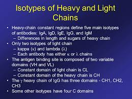 difference between kappa and lambda light chains antibody structure and the generation of b cell diversity ppt download