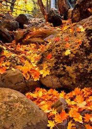 colors autumn leaves autumn fall leaves leaves