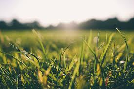 free stock photos of grass pexels