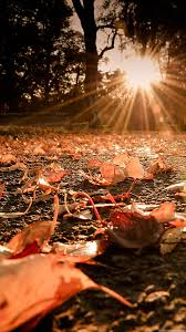 fall pumpkin wallpaper hd nature iphone 6 plus wallpapers autumn leaves on the ground