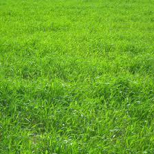 grassland native plants buchanan u0027s plants buchanansplants twitter