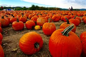 Local Pumpkin Farms In Nj by Weekend Escape From Nyc Top 10 Pumpkin Patches Near New York