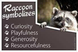 unfolding facts about what a raccoon symbolizes