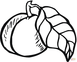 fruit and nuts coloring pages fruit and nuts coloring sheets