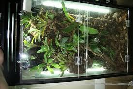 new terrarium idea dendroboard