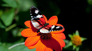 hd photo of butterfly on flower