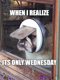 Wednesday Meme - it s only wednesday dog imgflip