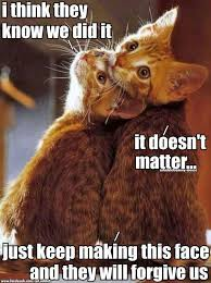 Sneaky Cat Meme - sneaky kitties 3 cats pinterest cat animal and kitty