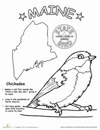 maine state bird worksheet education com