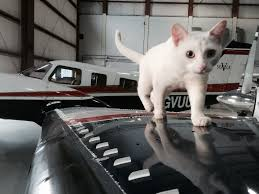 who else has a hangar cat aviation
