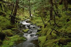 free forest stream wallpaper 2000x1333 8341