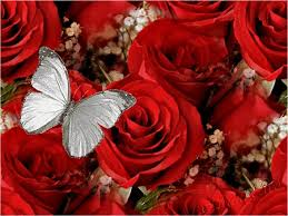 roses and butterfly desktop nexus wallpapers butterflies